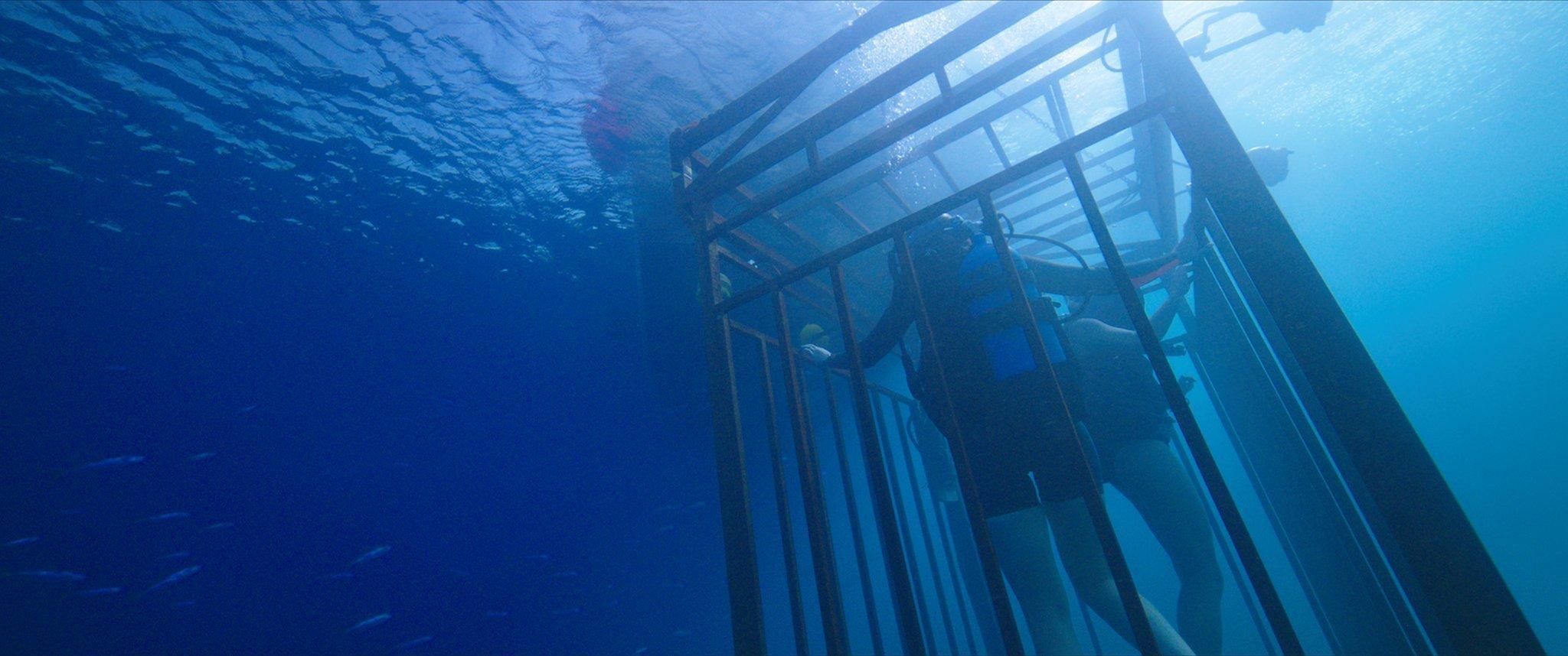 Photo du film 47 Meters Down avec la cage dans l'eau