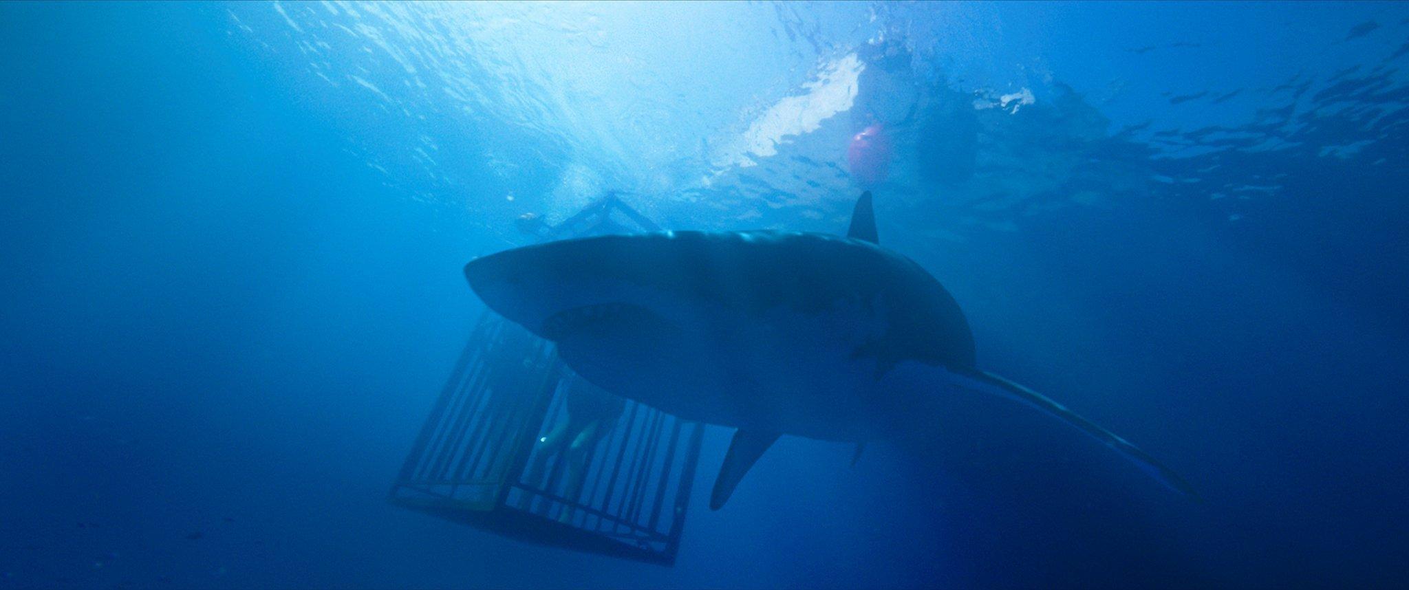 Photo du film 47 Meters Down avec un requin